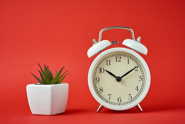 White retro alarm clock and house plant on red background