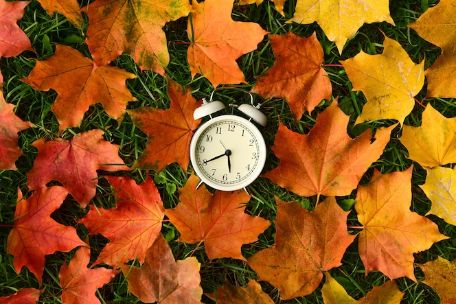 White retro alarm clock lies in the center of fallen colored maple leaves on the green grass