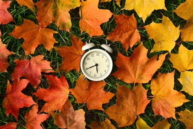 Белый ретро-будильник находится в центре опавших цветных кленовых листьев на зеленой траве