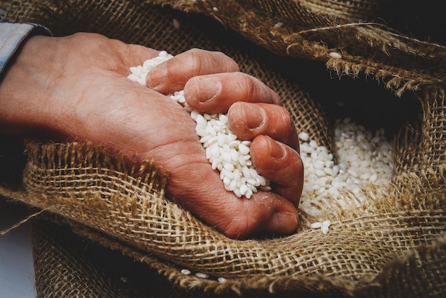 White rice in the hand in burlap sack