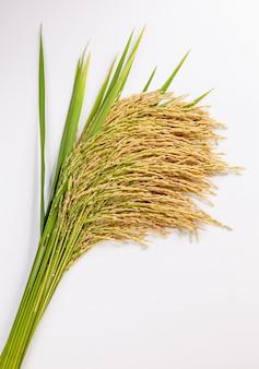 흰색 표면에 흰 쌀 공장