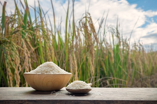 White rice or uncooked white rice in wooden bowl and wooden spoon with the rice field background