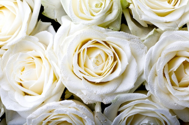 White rose bouquet.holiday day valentine ,birthday,,gift.