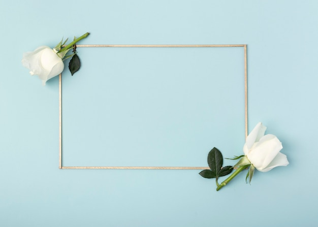 White rose flowers and frame on blue background