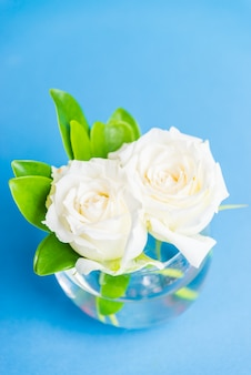 White rose in vase glass