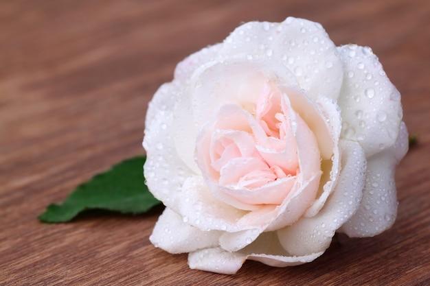 木の表面に葉のある白いバラ