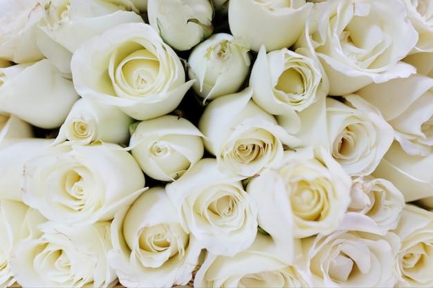 흰 장미 추상적 인 배경입니다. 발렌타인 데이 및 빈티지 스타일 개념에 사용