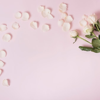 White roses and petals over pink background