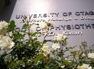 Белые розы институционально тени