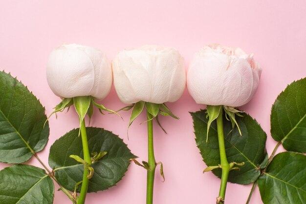 パステルピンクの背景に白いバラ。休日と愛のアイテム