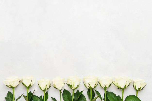 白い背景の上の白いバラ。母の日、バレンタインデー、誕生日のお祝いのコンセプト。グリーティングカード。コピースペース、上面図。ミニマリズム