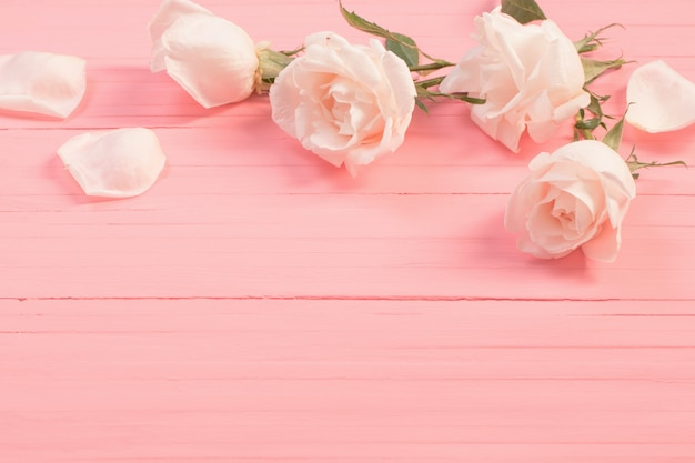 White roses on pink wooden background