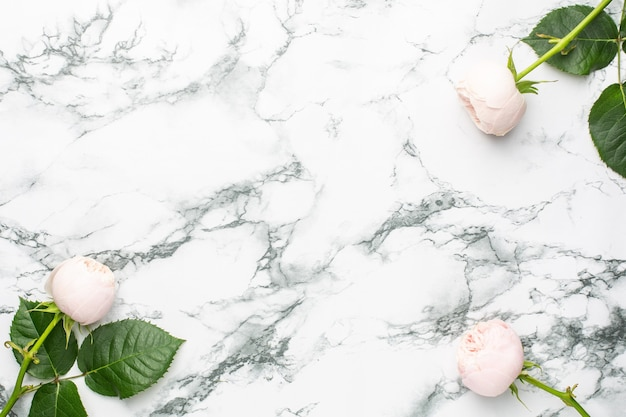White roses on white and black marble background with copyspace