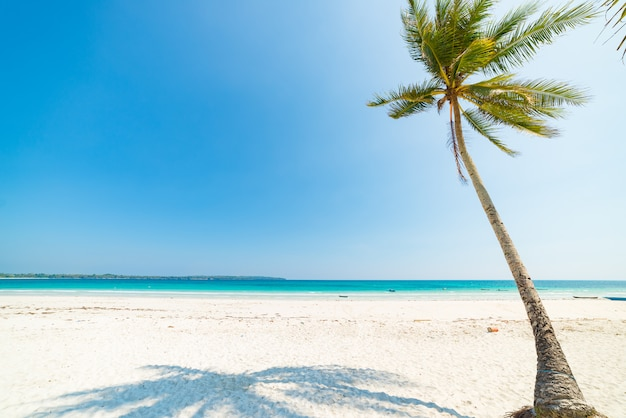 White sand beach coconut trees and palm frond, turquoise blue water, tropical paradise, travel destination, kei island, moluccas, indonesia, desert beach no people