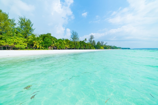 White sand beach with coconut palm trees turquoise transparent water, tropical travel destination, desert beach no people - kei islands, moluccas, indonesia