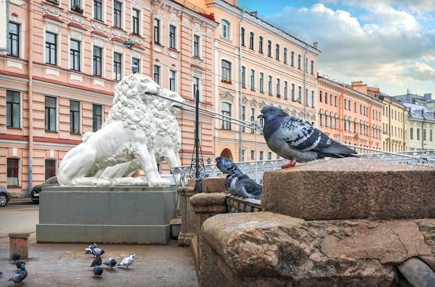 Белые скульптуры львов на львином мосту через канал грибоедова в санкт-петербурге и голубей на парапете в пасмурный зимний день