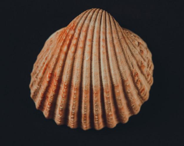 검은 배경에 고립 된 흰 바다 조개