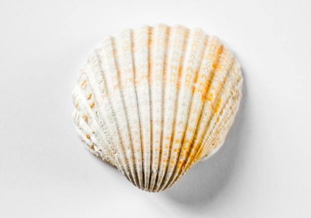 흰 바다 셸 흰색 배경에 고립