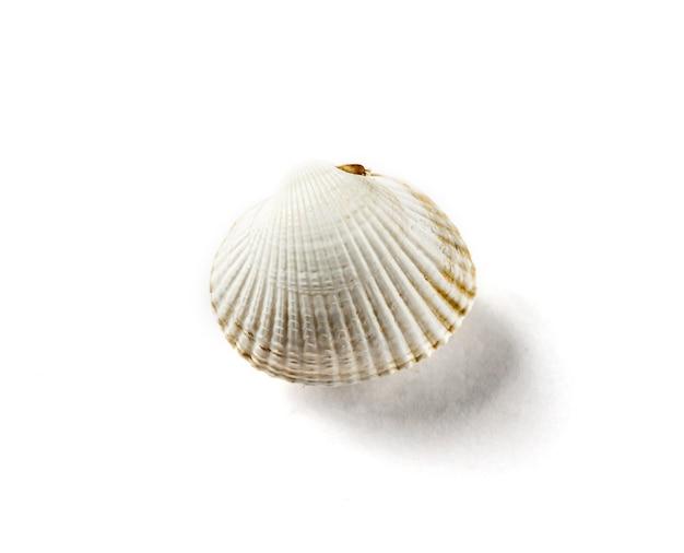 흰색 배경에 고립 된 하얀 바다 조개