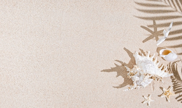 White sea shells and star fish on sand and palm tree shadows.