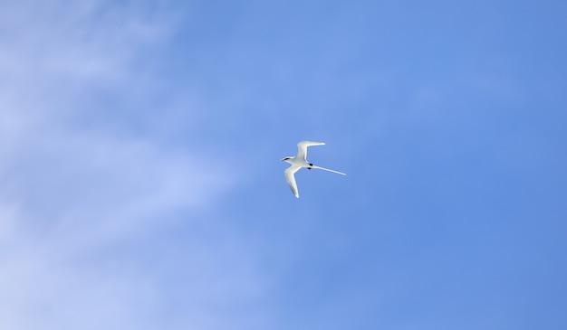 White seabird flying in the sky in the indian ocean