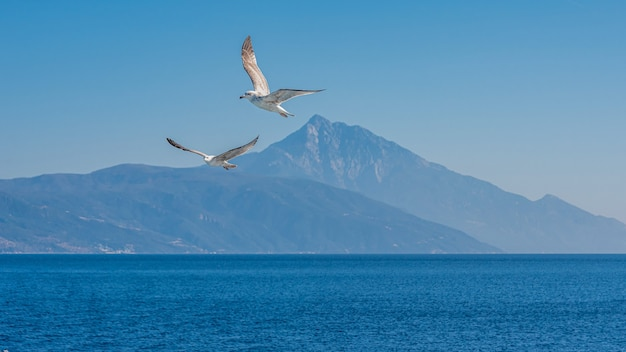 White seagull flying in the blue sunny sky over the coast of the sea