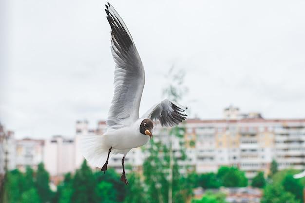 くちばしのパンと飛行中の白いカモメ