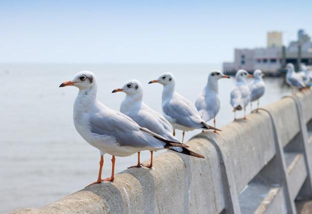 Белая чайка стоя на мосте в предпосылке природы.