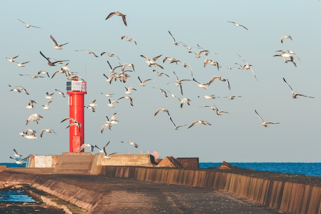 White seagulls flying against the red lighthouse