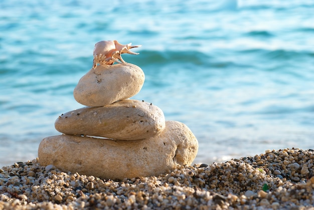 Белая ракушка на морском песчаном пляже