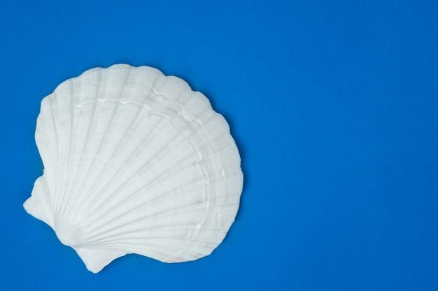 흰색은 파란색 미니멀리즘 장식에 고립 된 쉘을 참조하십시오. 수중 바다와 바다 개념