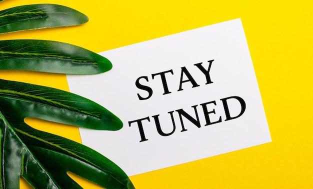 植物の緑の葉の近くの明るい黄色の背景に「staytuned」と書かれた白い紙。エコナチュラルバナーコンセプト