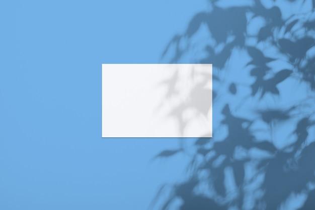 Белый лист на стене цвета phantom blue с тенью от дерева