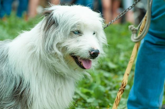彼の農民の主人の近くの白い羊飼いの犬