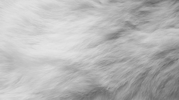 White silk feathers. wool, white rabbit skin