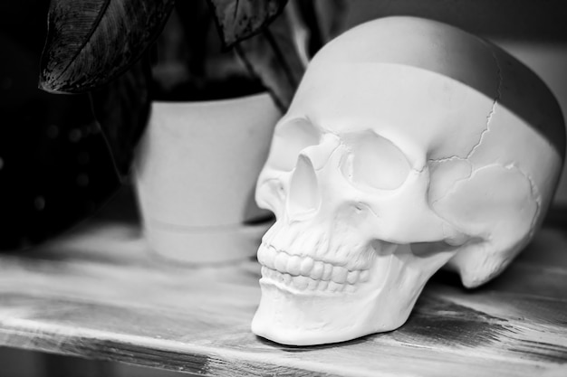 White skull on dark background