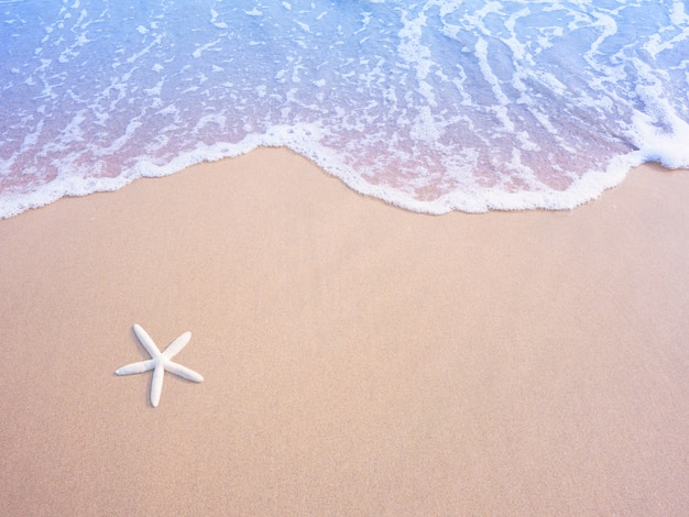White small starfish on sand and pastel water wave, vintage filter effect.