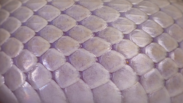 Белая змеиная кожа текстура фон
