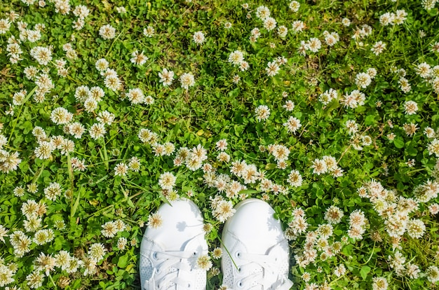 White sneakers on the background of white flowers clover.