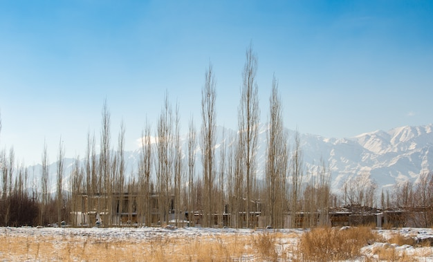 White snow covered dry grass- trees and village in winter season with himalayan range background