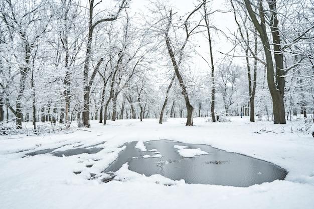 Зимний городской парк, покрытый белым снегом, с замерзшей лужей посреди дороги.