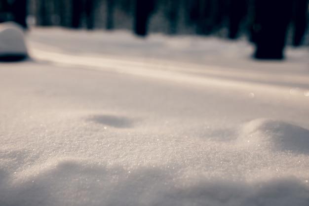 Белый снег в утреннем лесу искрится на солнышке