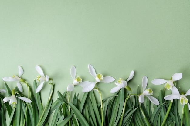 Белые подснежники цветы плоские лежали