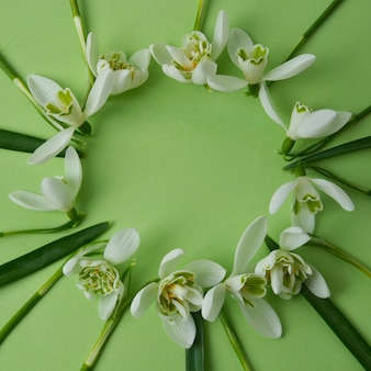 White snowdrops arranged in circle, green background with space for text.