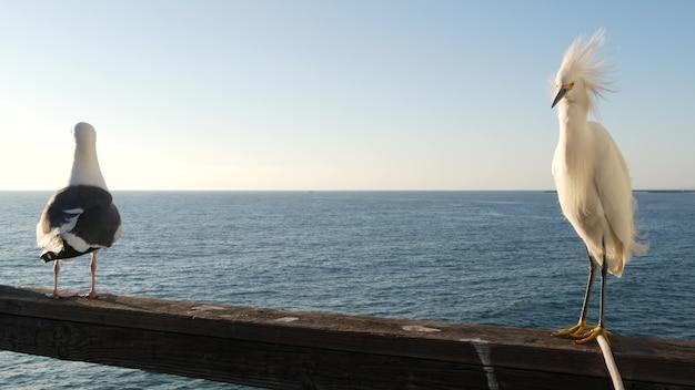미국 캘리포니아 부두 난간에 하얀 백로. 바다 해변, 바다 물결입니다. 해안 왜가리 새