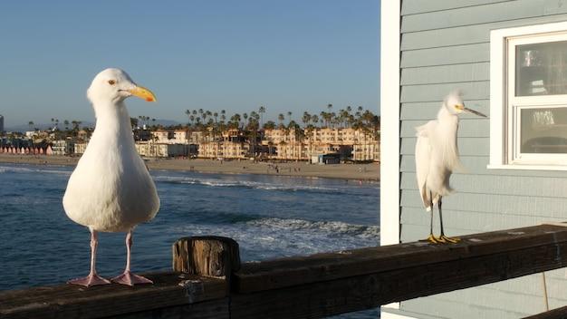 부두 난간에 하얀 스노이 백로 캘리포니아 미국 바다 해변 바다 물 파도 해안 헤론 새