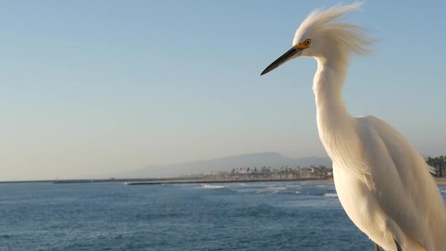 미국 캘리포니아 오션사이드 보드워크의 목조 부두 난간에 있는 하얀 백로. 바다 해변, 바다 물결입니다. 해안 헤론 새, 바다 경치 및 푸른 하늘을 닫습니다. 재미있는 동물 행동 초상화.