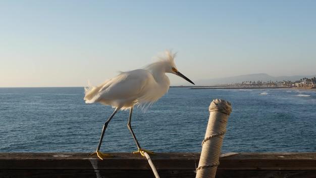 하얀 눈 덮인 백로 나무 부두 난간, 판자 산책로, 캘리포니아 미국. 바다 해변, 해안 왜가리 새