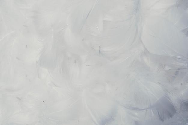 흰색 부드러운 깃털 배경
