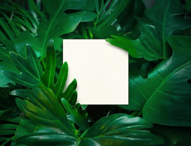 Белое пространство с зелеными листьями фона дизайн с белой бумагой